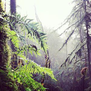 misty ferns